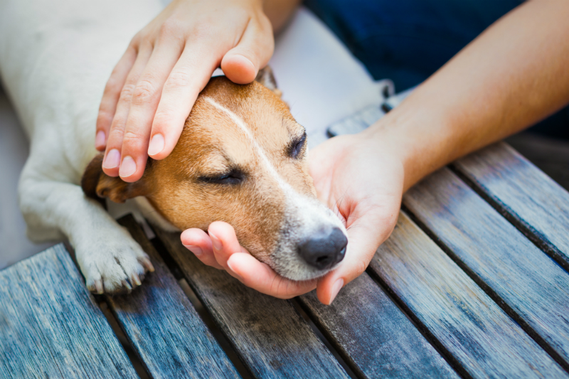 A dog rests its head on a human's hand.