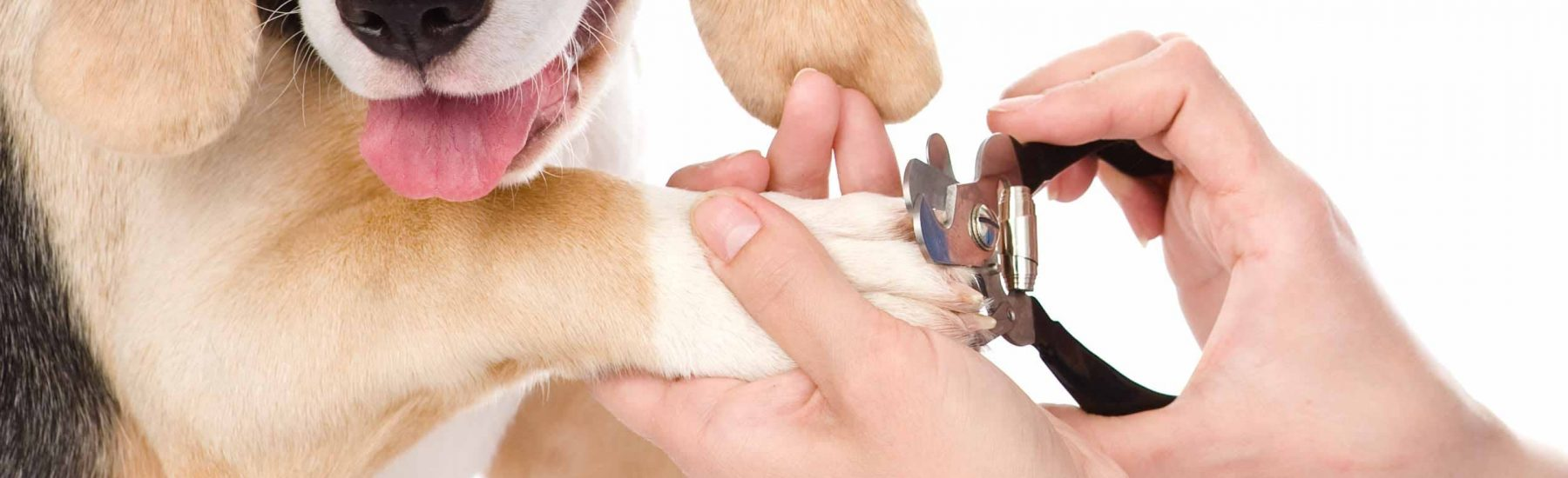 A dog getting its nails trimmed.